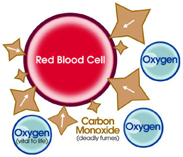 red blood cells and carbon monoxide