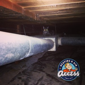 old ductwork with cat